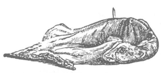 Rabbit for boiling.