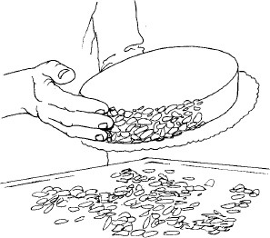 Figure 11-12 Pressing crushed almonds onto the side of the Diplomat Cake